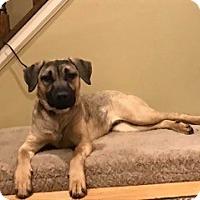 Adopt A Pet :: Riley - Randolph, NJ