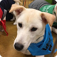 Adopt A Pet :: Dallas - Smithtown, NY