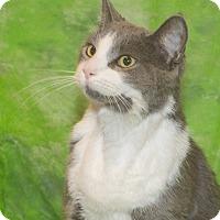 Adopt A Pet :: Cinder - Elmwood Park, NJ