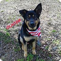 Adopt A Pet :: GUNTER - Princeton, KY
