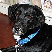 Adopt A Pet :: Sassy - Hastings, NY
