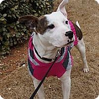 Adopt A Pet :: Painter - Greenville, SC