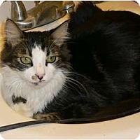 Adopt A Pet :: Camden - lake elsinore, CA