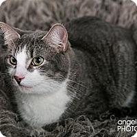 Adopt A Pet :: Duke - Eagan, MN