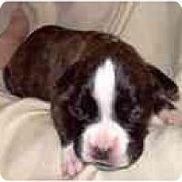 Adopt A Pet :: Holly - Sunderland, MA
