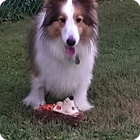 Adopt A Pet :: Bailey - ADOPTION PENDING - Abingdon, MD