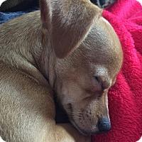 Adopt A Pet :: Jameson - Oak Creek, WI