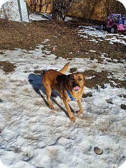 German Shepherd Dog Mix Dog for adoption in Loveland, Colorado - Punkin
