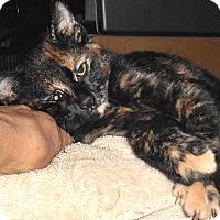 Adopt A Pet :: Geraldine - Chattanooga, TN