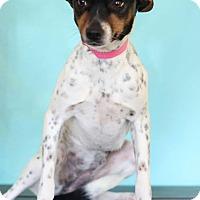 Adopt A Pet :: Kandi - Waldorf, MD