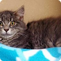 Adopt A Pet :: Caboodle - Lincolnton, NC