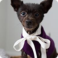 Adopt A Pet :: Frannie - Summerville, SC