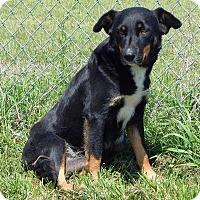 Adopt A Pet :: Coral - Terrell, TX