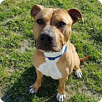 Adopt A Pet :: 1703-0640 Wrecking - Virginia Beach, VA