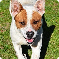 Adopt A Pet :: Honey - Ridgeland, SC