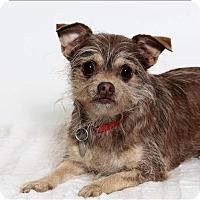 Adopt A Pet :: Coco - San Luis Obispo, CA