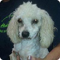Adopt A Pet :: Sadie - Albemarle, NC