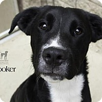 Adopt A Pet :: Hooker - South Bend, IN