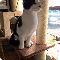 Adopt A Pet :: Winona Pepe LePeu's girlfriend - McDonough, GA