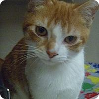 Adopt A Pet :: Lana - Hamburg, NY
