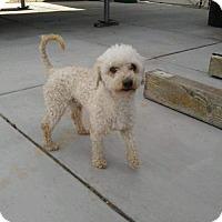 Adopt A Pet :: Oliver - La Verne, CA