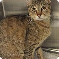 Adopt A Pet :: Mama Mia - Sherwood, OR