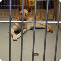 Adopt A Pet :: 348049 LF - Wildomar, CA