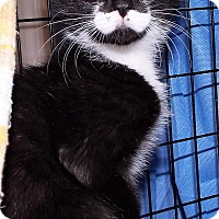 Adopt A Pet :: Marshall - Grants Pass, OR