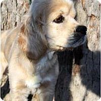 Adopt A Pet :: Canyon - Sugarland, TX