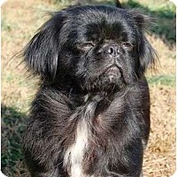 Adopt A Pet :: URGENT Daisy Mae - Staunton, VA