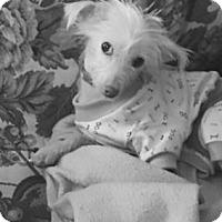 Adopt A Pet :: Ginger - ROME, NY