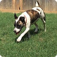 Adopt A Pet :: Lily - Colmar, PA