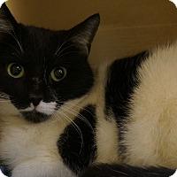 Adopt A Pet :: Banjo - Salem, NH