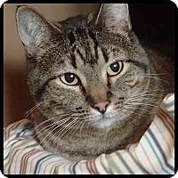 Adopt A Pet :: Rocky - Colorado Springs, CO