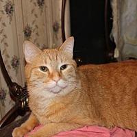 Adopt A Pet :: Cassia - Liverpool, NY