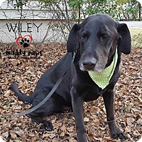 Adopt A Pet :: Wiley (Courtesy Post) - Council Bluffs, IA