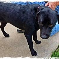 Adopt A Pet :: Clyde - Flower Mound, TX