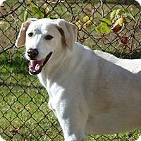 Adopt A Pet :: Nate - Houston, TX