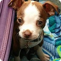 Adopt A Pet :: PRINCETON - North Augusta, SC