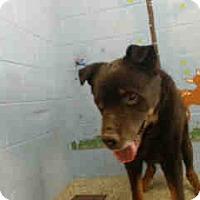 Adopt A Pet :: URGENT ON 3/24  San Bernardino - San Bernardino, CA