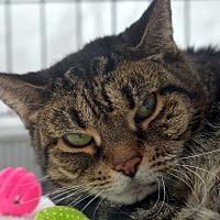 Adopt A Pet :: Kitsky - Brooklyn, NY