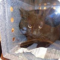 Adopt A Pet :: 338879 - Wildomar, CA