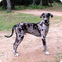 Adopt A Pet :: Pumpkin - Austin, TX