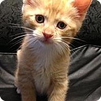 Adopt A Pet :: Deacon - bloomfield, NJ