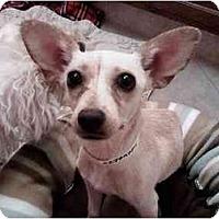 Adopt A Pet :: Goldie Girl - Scottsdale, AZ