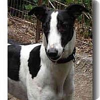 Adopt A Pet :: Mick - Roanoke, VA