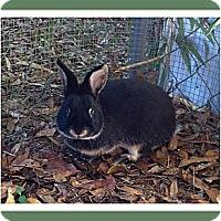 Adopt A Pet :: Thumps - Williston, FL