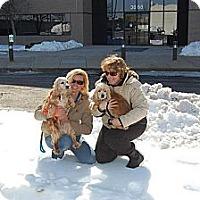 Adopt A Pet :: Darla - Menomonee Falls, WI