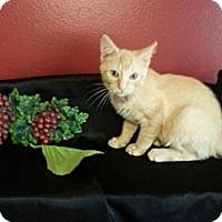 Adopt A Pet :: Ryder - Clearfield, UT