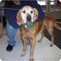 Adopt A Pet :: Samuel - Denver, CO